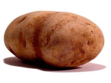 строительство картофелехранилища